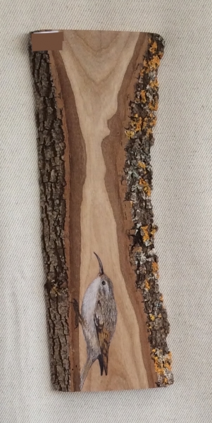 Short-toed  treecreeper on Oak / Agateador europeo sobre Roble. SOLD / VENDIDO