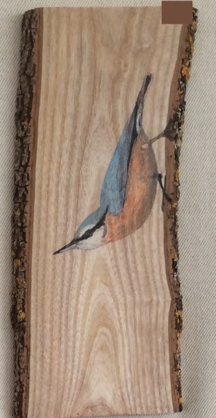 Eurasian nuthatch on Oak / Trepador azul sobre Roble. SOLD / VENDIDO