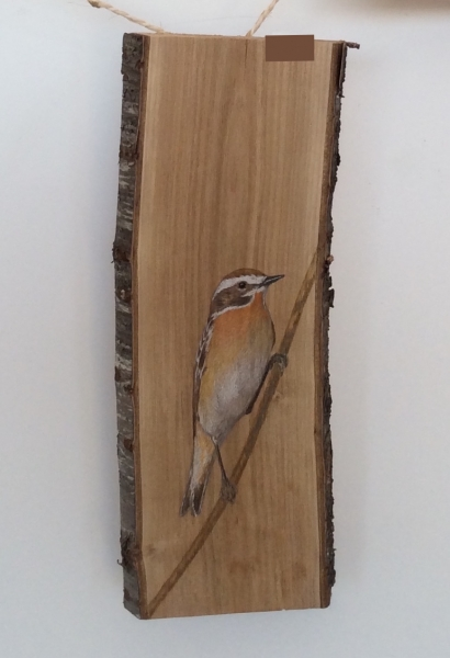 Whinchat on Cherry tree / Tarabilla norteña sobre Cerezo. SOLD / VENDIDO