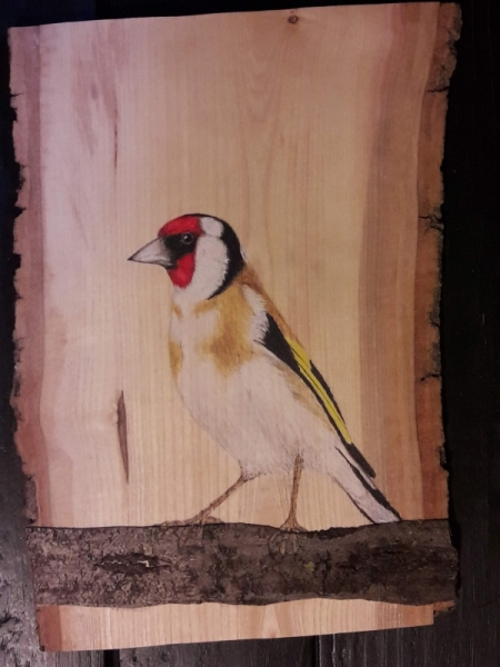 European goldfinch on Ash and Cherry tree / Jilguero sobre Fresno y Cerezo . VENDIDO / SOLD