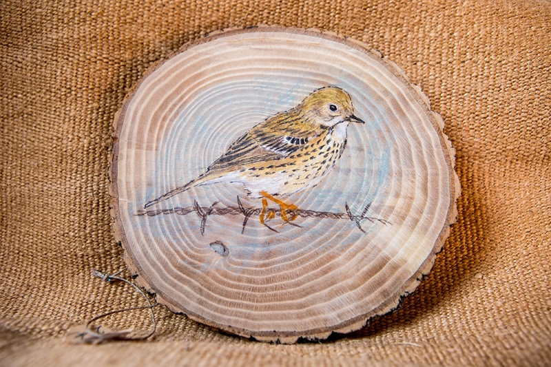 Meadow pipit on Oak / Bisbita pratense sobre Roble. SOLD / VENDIDO