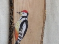 Middle spotted woodpecker on Oak / Pico mediano sobre  Roble. SOLD / VENDIDO