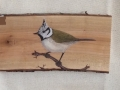 Crested tit on Cherry tree / Herrerillo capuchino sobre  Cerezo. SOLD / VENDIDO