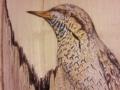 Eurasian wryneck on Ash / Torcecuello eurasiático sobre Fresno