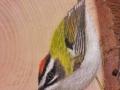 Marsh tit and Firecrest on Ash / Carbonero palustre y Reyezuelo listado sobre Fresno