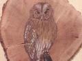 Tawny owl on Oak / Cárabo común sobre Roble. SOLD / VENDIDO