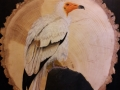 Egyptian Vulture on Ash and Slate / Alimoche común sobre Fresno y Pizarra. VENDIDO / SOLD