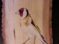European goldfinch on Ash and Cherry tree / Jilguero sobre Fresno y Cerezo . VENDIDO / SOLD