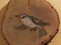 Firecrest on Oak / Reyezuelo listado sobre Encina. SOLD / VENDIDO