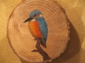 Common kingfisher on Oak / Martín pescador sobre Roble. SOLD / VENDIDO