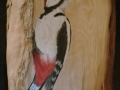 Great spotted woodpecker on Pear wood / Pico picapinos sobre Peral.