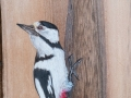 Great spotted woodpecker on Walnut tree / Pico picapinos sobre Nogal