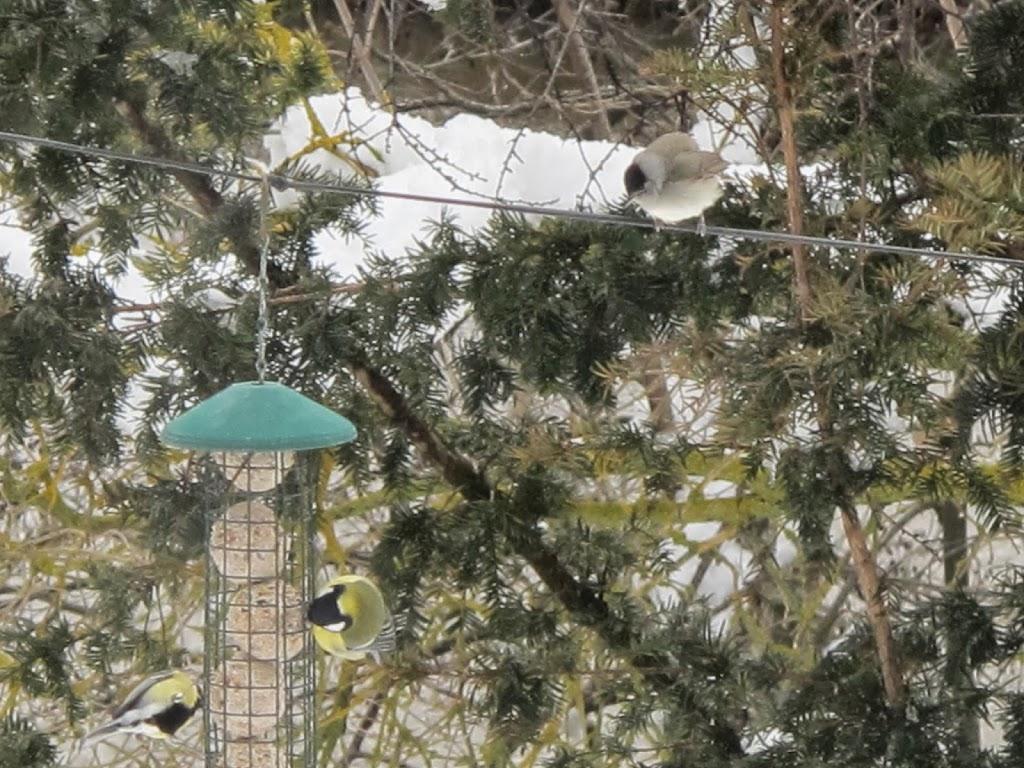 Comederos para aves silvestres molino del canto - Comedero de pajaros ...