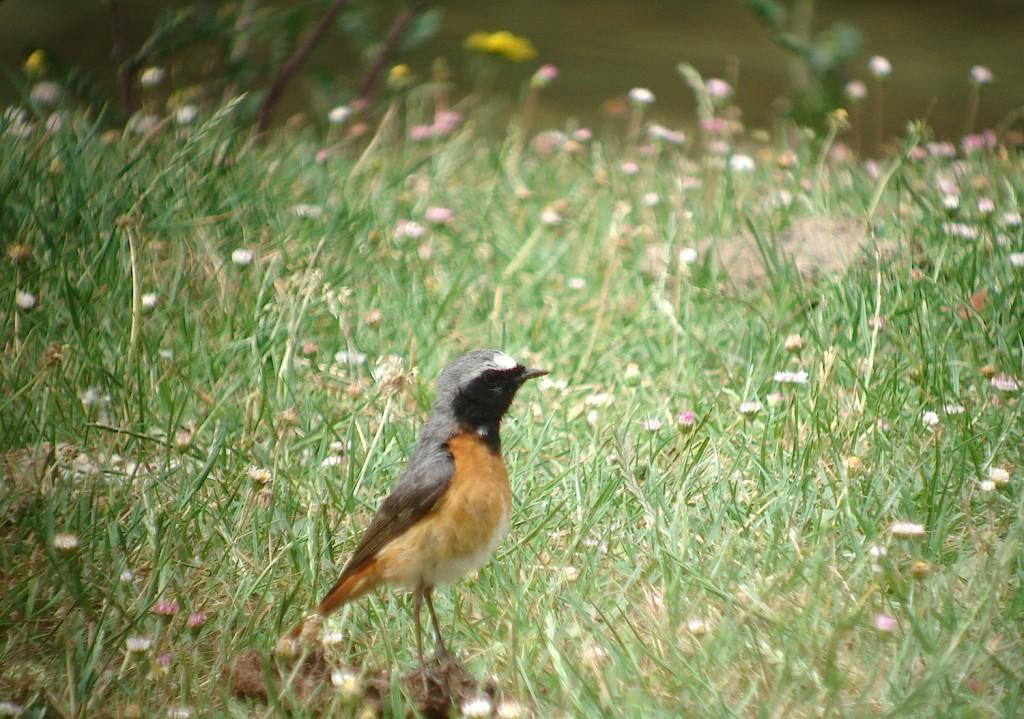 Birding at P.N. Alto Ebro