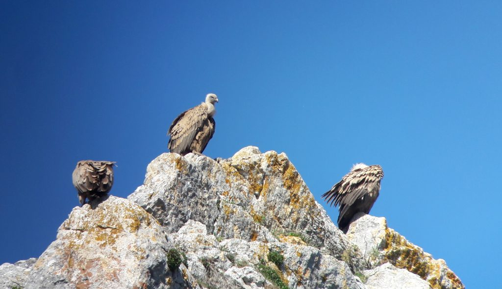 Por el momento, seguimos registrando aves.