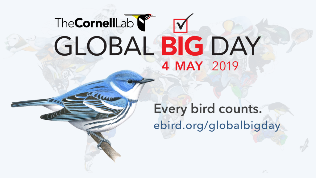 GBD, Global Bird Day