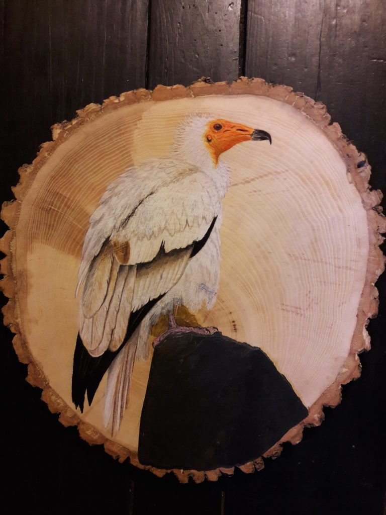 Egyptian Vulture on Ash and Slate / Alimoche común sobre Fresno y Pizarra