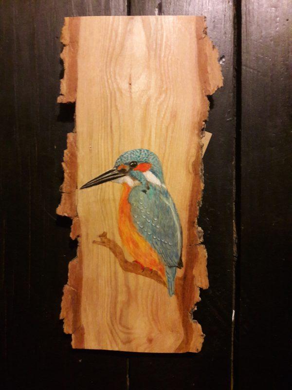 Common Kingfisher on Ash / Martín pescador común sobre Fresno
