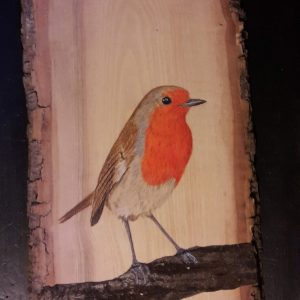 Petirrojo europeo sobre Fresno y Cerezo / European Robin on Ash and Cherry tree