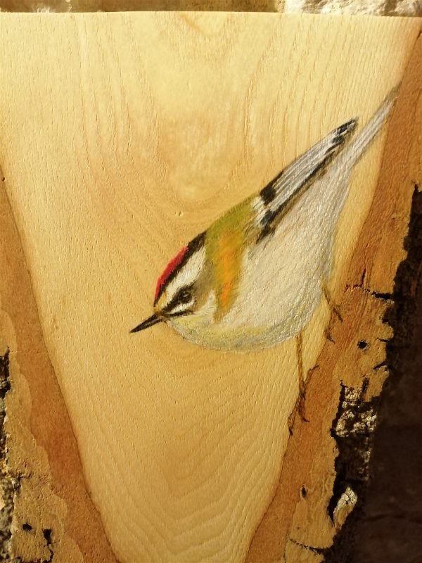 Firecrest on Oak / Reyezuelo listado sobre Roble
