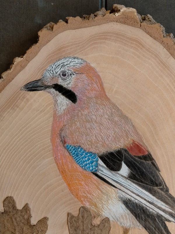 Eurasian Jay on Oak / Arrendajo eurasiático sobre Roble 25cm.