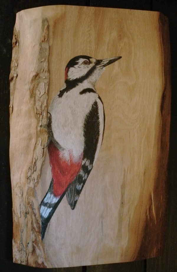 Great spotted woodpecker on Pear wood / Pico picapinos sobre Peral 31 x 20